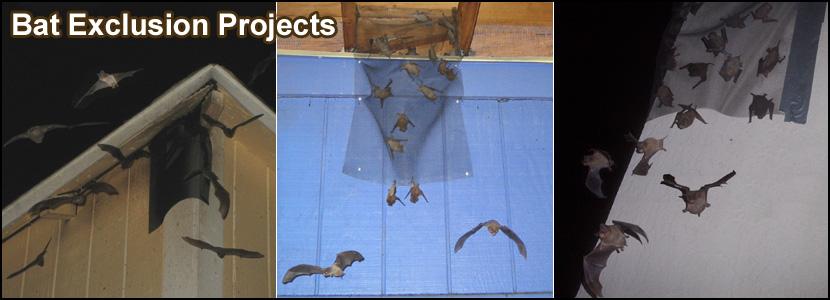 Syracuse Bat Removal New York Bat Control Company