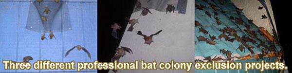 Bat Exclusion Process - Step-By-Step on blinds door, privacy door, welcome door, driver door,